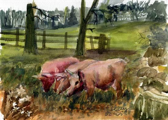 happy-pigs
